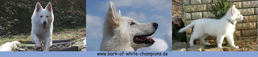 Bark-of-white-Champions2